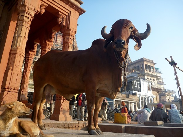 travel beauty travel diaries india
